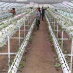 растениеводство в теплице