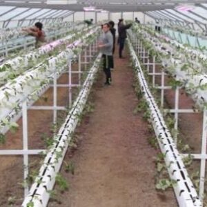 Растениеводство в теплице как бизнес