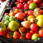 хранение помидор после теплицы