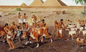сельское хозяйство в египте
