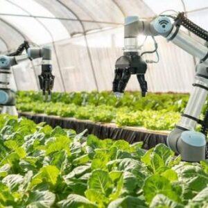 Тепличная автоматизация – эффективность и качество продукции