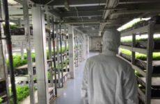 Аэропоника – растения, парящие в воздухе