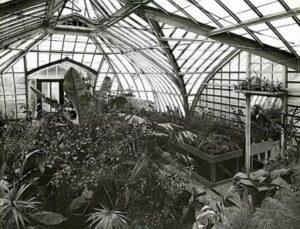 одна из первых оранжерей в истории теплиц