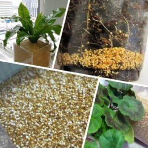 Ионитопоника – ноу – хау для растениеводства