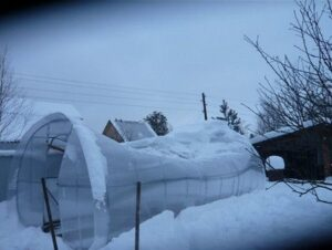 теплица, которая не выдержала снеговой нагрузки